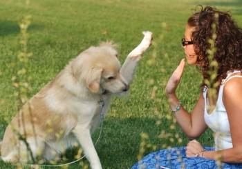 adestrar_qual-e-melhor-fase-para-adestrar-o-cachorro