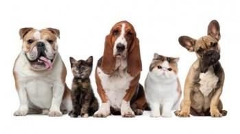 animais-de-estimacao-blog-680x380