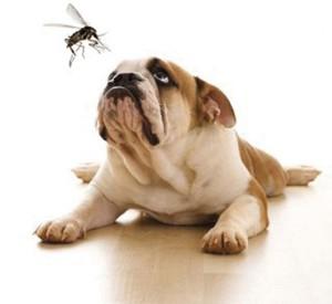 morador-de-pereira-barreto-ganha-na-justica-direito-de-cuidar-de-cachorro-com-leishmaniose-pdd3